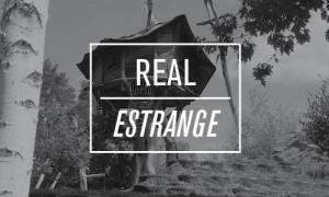 REAL-TreehouseRemodeling