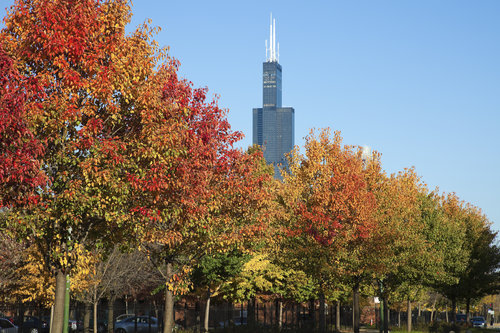 chicago-fall-autumn-sears-tower-housing-market